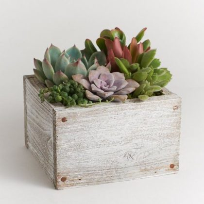 Virtual Succulent Planter Masterclass with Alice!