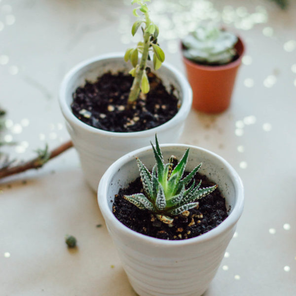 Decorating Your Small Space with Potted Plants